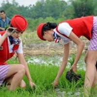 一种农业生产用蔬菜播种设备